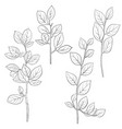 drawing branches vector image vector image