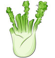 fennel cartoon isolated on white vector image vector image