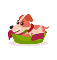 jack russell terrier character playing in green vector image vector image