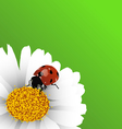 ladybug background vector image vector image