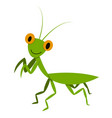mantis mantodea grasshopper in flat style vector image