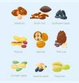 piles of different nuts pistachio hazelnut almond vector image vector image