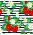seamless pattern with strawberry on strips summer vector image vector image