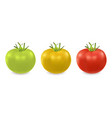3d realistic green yellow and red tomato vector image