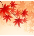 Autumn leaves background of sky vector image
