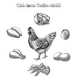 chicken collection hand draw vintage engraving vector image