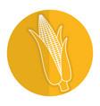 corn cob isolated icon vector image