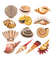 shells or seashells isolated icons vector image vector image