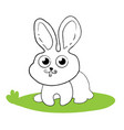 surprised bunny rabbit sitting on green grass vector image vector image
