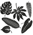 tropical plant leaves collection vector image vector image