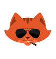 cat cool serious avatar emotions pet smoking vector image