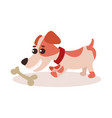 jack russell terrier character playing with bone vector image vector image
