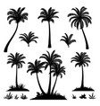 palm trees and plants silhouettes vector image vector image