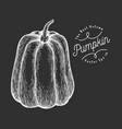 pumpkin hand drawn vegetable on chalk board vector image