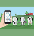 control of a herd of cows on a dairy farm vector image