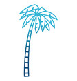 tree palm isolated vector image vector image