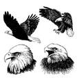 set eagle doodle hand drawn vector image
