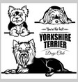 yorkshire terrier - set isolated vector image vector image