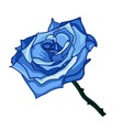 blue frozen rose on a white background vector image vector image