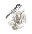 sparrow bird hand drawn in vintage style with vector image vector image