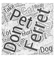 Ferrets As Pets Word Cloud Concept vector image vector image