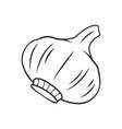 garlic linear icon vector image