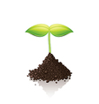 growing sprout vector image vector image