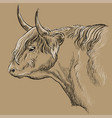 head highland cattle profile vector image