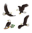 set bald eagles vector image