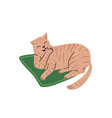 beautiful pastel color cat washing itself and vector image vector image