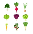 Fresh Vegetables With Roots Primitive vector image vector image