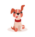 funny jack russell terrier dog character vector image