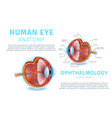 human eye anatomy structure medical infographics vector image vector image