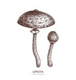 lepiota mushroom hand drawn food drawing vector image