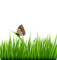 Nature background with green grass and a butterfly vector image