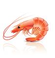 object shrimp vector image