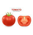 3d realistic different tomato set closeup vector image vector image