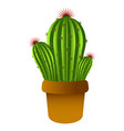 isolated cute cactus vector image