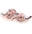 jasmine flowers on a branch vector image vector image