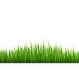 Nature background with green grass vector image