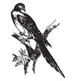 passenger pigeon vintage vector image vector image