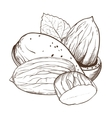 Almond isolated on white background vector image vector image
