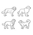 dogs different breeds in outlines set2 vector image vector image