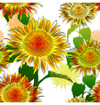 Hand Drawn Sunflower Background vector image