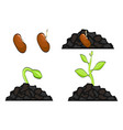 plant growth stages from seed to sprout vector image vector image