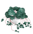 spotted plant in a white pot element of home vector image vector image