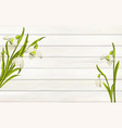 spring flowers background for your design wooden vector image