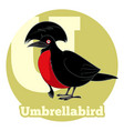 abc cartoon umbrellabird vector image vector image