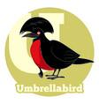 abc cartoon umbrellabird vector image