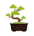bonsai tree culture japanese vector image